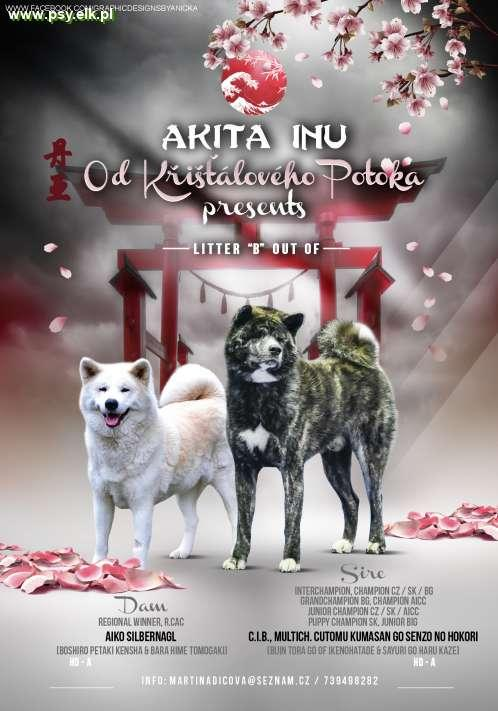 Akita Inu puppies with pedigree